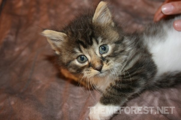 Watermarked Cat